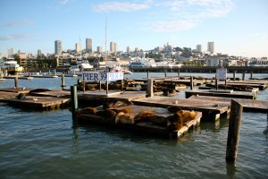 Fisherman's Wharf - San Francisco. Used by Creative Commons Attribution License. Photographer: Robin Capper